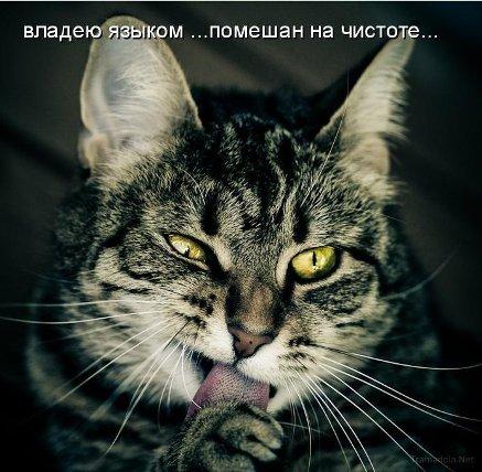 http://kotiki-lubimci.ucoz.ru/1287835685_1.jpg