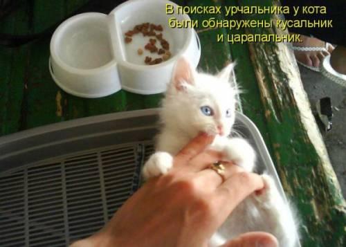 http://kotiki-lubimci.ucoz.ru/_ph/1/2/777845094.jpg